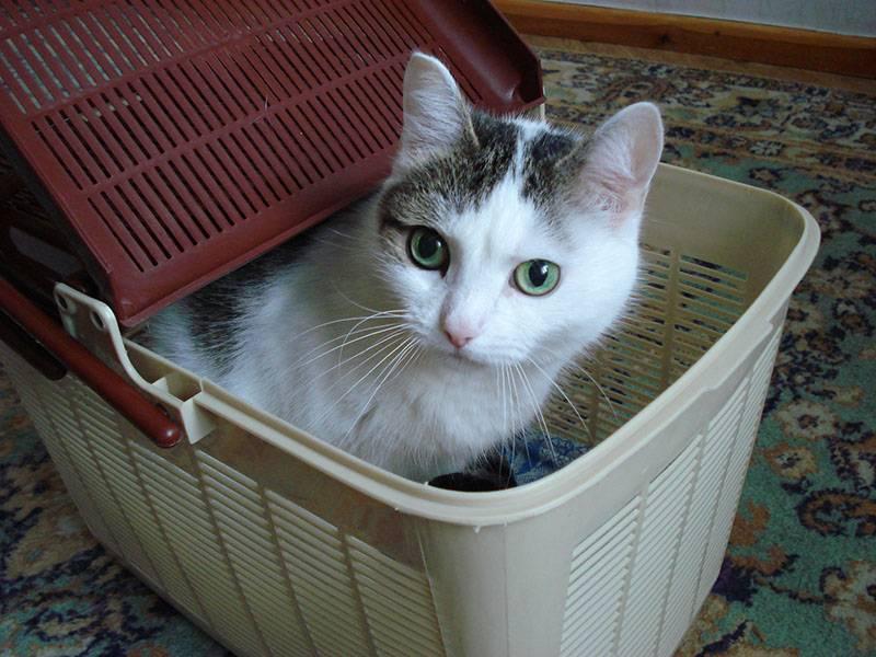 Cat Liza-2007 (16) 800х600