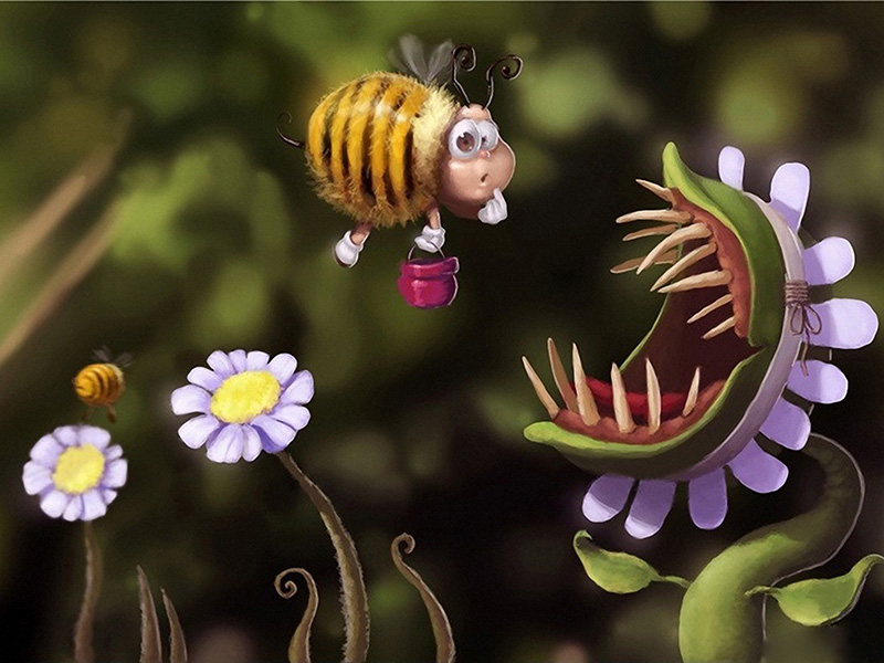 Amazing Cute Most Funny HD Wallpaper Picture